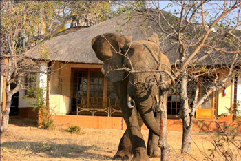 5 star Luxury Kruger National Park Safari, South Africa | Kruger & African Wildlife | Scoop.it