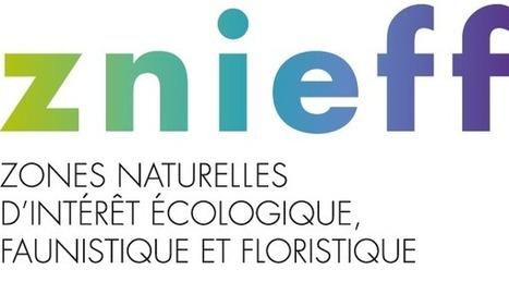 INPN, ZNIEFF 730010124 - Forêt de Sivens - Description   Salvetat Durable   Scoop.it