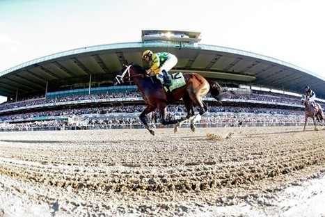 A Belmont guide for race fans of every breed. | Horse Racing News | Scoop.it