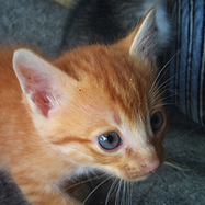 """What Is """"Fading Kitten Syndrome"""" and Why Do So Many Foster Kittens Die from It? - Catster   Cats   Scoop.it"""