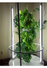 Light Kit for Vertical Aeroponic Garden | Owlyn Solutions | Better Home and Garden | Scoop.it