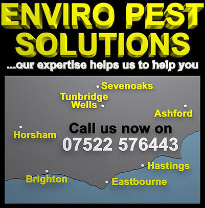Pest Control in Hastings by Enviro Pest Solutions | Pest Control Hastings | Scoop.it
