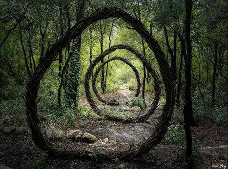Une année à magnifier la forêt - Kaizen magazine | Ca m'interpelle... | Scoop.it