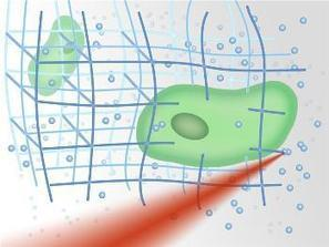 Creating Nanostructures with Embedded Live Cells Using Laser Technology | NanoMedicine Revolution | Scoop.it