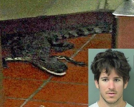 Man Arrested For Lobbing Gator Into Drive-Thru Window (Video) | LibertyE Global Renaissance | Scoop.it