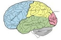 Teach Students How The Brain Works | Comprehension | Scoop.it