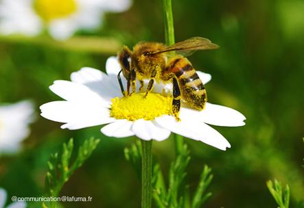 Jardiniers : aidez les abeilles !   Les colocs du jardin   Scoop.it