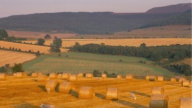 UK faces 'significant' shortage of farmland by 2030 - BBC News   Human Geography   Scoop.it