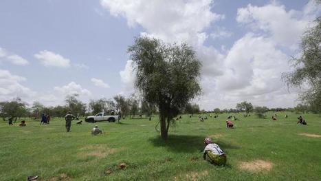 Monique Barbut : «100% des migrants viennent de zones arides»   Afrique: développement durable et environnement   Scoop.it