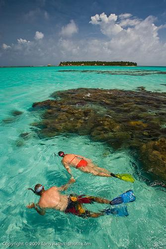 Snorkeling Trip - Ambergris Caye Belize Message Board | Belize in Social Media | Scoop.it