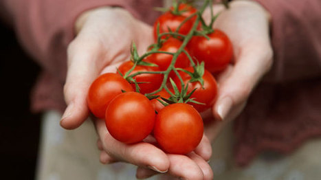 Organic tomatoes contain more vitamin C: study | Fitness, Health, Running and Weight loss | Scoop.it