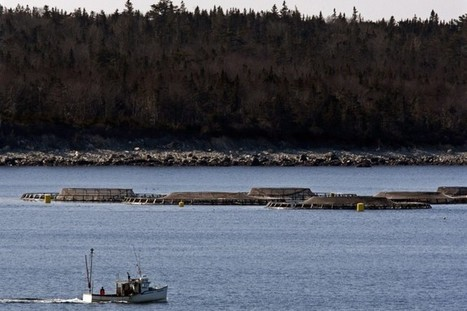 Salmon Farming Heads Into Dark, Perilous Waters | Nova Scotia Fishing | Scoop.it