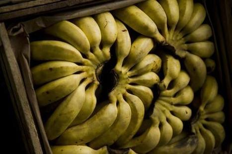 Fusion au sommet dans le commerce de la banane | International aid trends from a Belgian perspective | Scoop.it