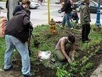 Giardini spontanei ed eco-blitz: cresce la lotta pacifica e verde - Brescia Oggi | Gli alberi nei giardini | Scoop.it