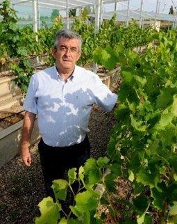 «Lo que ha sucedido con el tempranillo blanco ha sido muy ... - La Rioja   Vino   Scoop.it