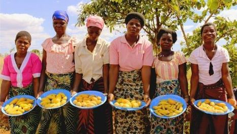 Sweet potato Vitamin A research wins World Food Prize - BBC (2016)  | Food Policy | Scoop.it