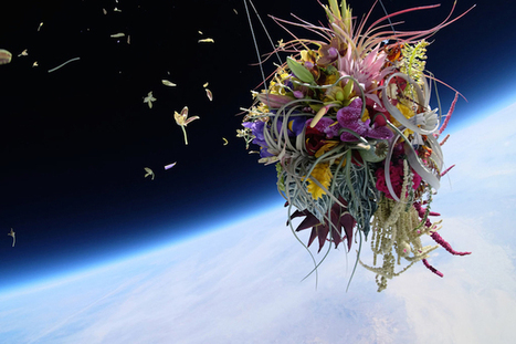 Japanese Bonsai Tree and Flowers Launched into Space in Incredible Journey   Spacetime Curiosities   Scoop.it