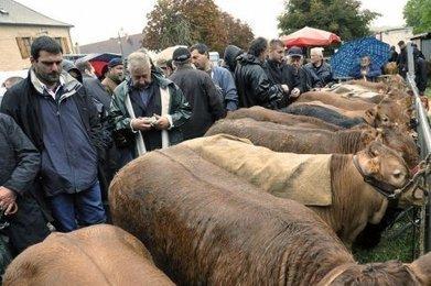 Les éleveurs ont fait fort | Agriculture en Dordogne | Scoop.it