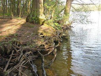 Comment les racines des plantes perçoivent les inondations et y répondent | Veille en dilettante | Scoop.it