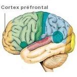 Autisme: des chercheurs sur une bonne piste cérébrale | PsychoMédia | Autisme actu | Scoop.it