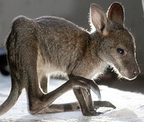Dark Roasted Blend: Category: Animals | animals | Scoop.it