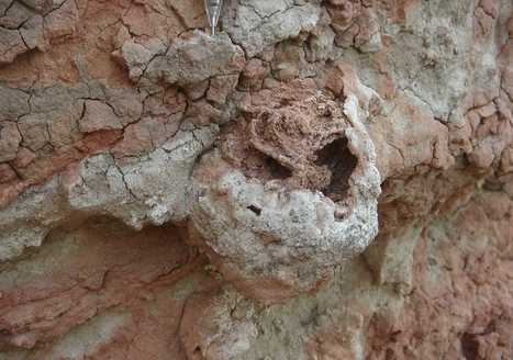 Termites figured out farming 25 million years before people did | Amazing Science | Scoop.it