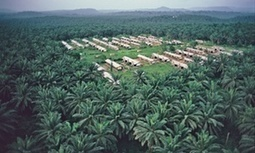 Africa's forests 'threatened by palm oil rush' | NEWS HAPPENINGS AROUND THE WORLD | Scoop.it