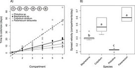 Colonization Rates in a Metacommunity Altered by Competition | Social Foraging | Scoop.it