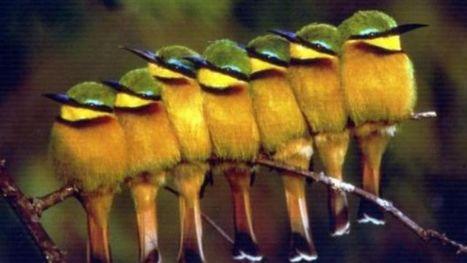 Le nid d'un oiseau rare, le guêpier, découvert en Belgique | Ecologie Animale | Scoop.it
