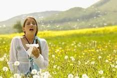 Are You Feeling the Effects of Seasonal Allergies? | Better Health Westchester | Scoop.it