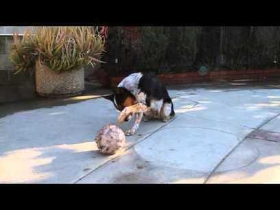 Smartest Dog In The World - Jumpy 123 trick | War In The Ukrain | Scoop.it