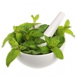 Fitoterapia: hierbas medicinales para elsudor | PRODUCTOS NATURALES | Scoop.it
