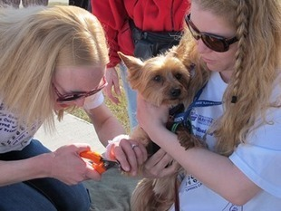 Cancer, Canines, and a Vet Tech Class | College Student Success Stories | Scoop.it
