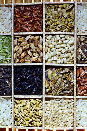 The International Rice Genebank - conserving rice | Agricultural Biodiversity | Scoop.it