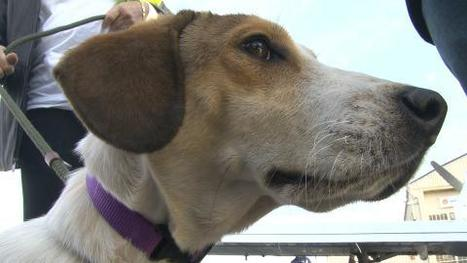 Miracle dog survives gas chamber in Alabama shelter | Animal Cruelty | Scoop.it