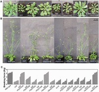 Evolutionary Conservation of Xylan Biosynthetic Genes in Selaginella moellendorffii and Physcomitrella patens | plant cell genetics | Scoop.it