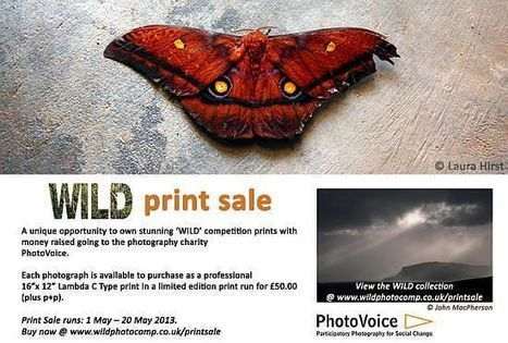 PhotoVoice Launches WILD Print Sale   PhotographyBLOG   PhotoVoice   Scoop.it