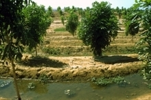 FAO Media Centre: The safe use of wastewater in agriculture offers multiple benefits | Earth Citizens Perspective | Scoop.it