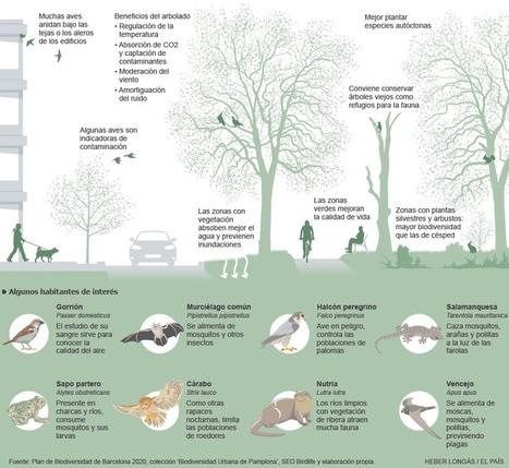 Los ecosistemas de las ciudades | Infraestructura Sostenible | Scoop.it