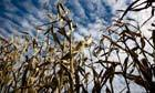 Will Barack Obama break his GM food labelling promise?   Food issues   Scoop.it