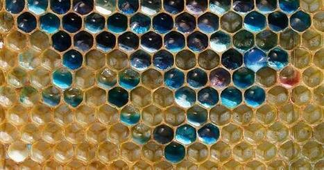 Colorful honey | Heal the world | Scoop.it