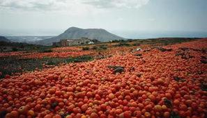 Mediterranean Food Waste | Open consultation 2013-2014| MAIB FTN Community-CIHEAM-IAM of Bari | managing supplies in the phillipines | Scoop.it