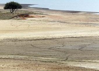 Los árboles necesitan hasta cuatro años para recuperarse del impacto de una sequía - EFE Futuro América   Era del conocimiento   Scoop.it