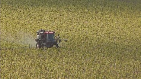 Les vignerons de Champagne bio demandent l'interdiction des herbicides | Chimie verte et agroécologie | Scoop.it