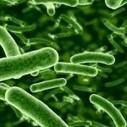 """DIY Bioterrorism"" - the SB perspective | Bio-Defence Industry Analyst | Scoop.it"