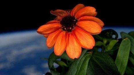 La primera flor que crece en el espacio | Era del conocimiento | Scoop.it