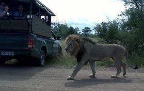 3 day Tremisana, Kruger Park and Balule safari | Kruger Tours | Kruger & African Wildlife | Scoop.it