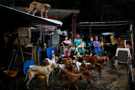 Venezuelan Food Shortages Force Many To Abandon Their Pets | Global Affairs, Immigration Policy | Scoop.it