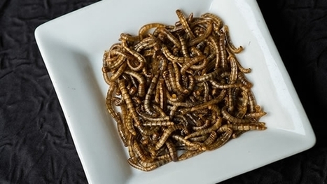OPINIÓN: Pues sí, una dieta de insectos podría limitar el cambio climático - PlanetaCNN, canal -  CNNMexico.com | Entomophagy: Edible Insects and the Future of Food | Scoop.it