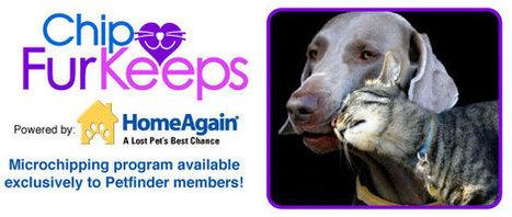 Chip FurKeeps Microchipping program - Petfinder Members | NYC's Animals | Scoop.it